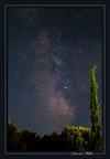 Cyprès des étoiles